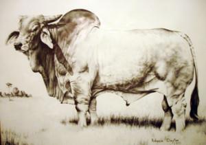Brahman-Standard-Bull1-300x211